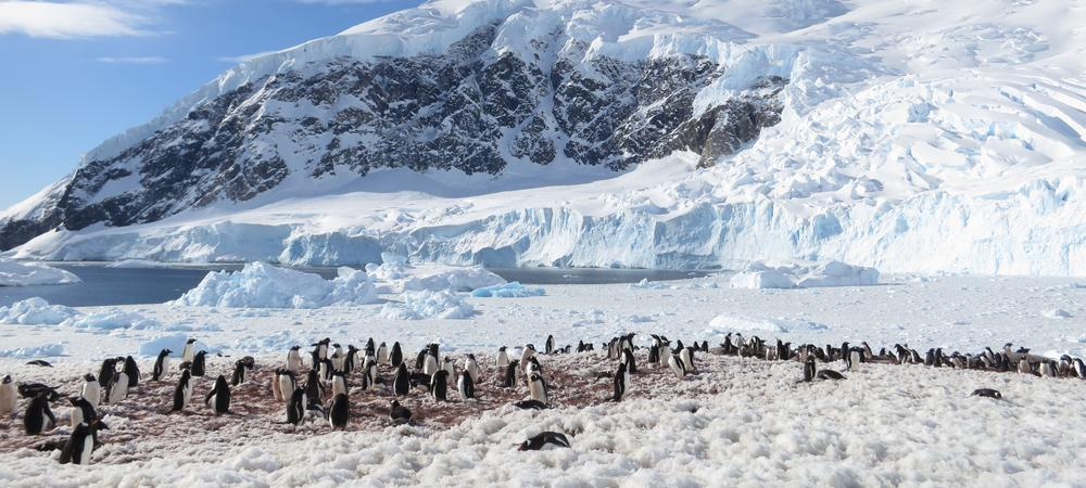 Expedition To Antarctica - Part 3: Cruising Down The Peninsula