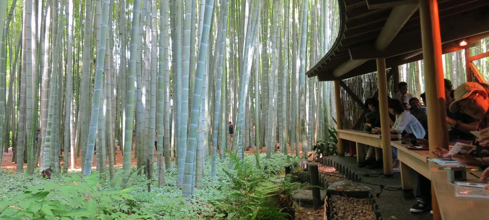 Feeling Zen in Kamakura's Bamboo Forest