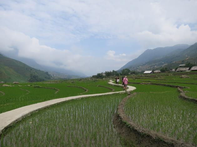 Path in rice paddies