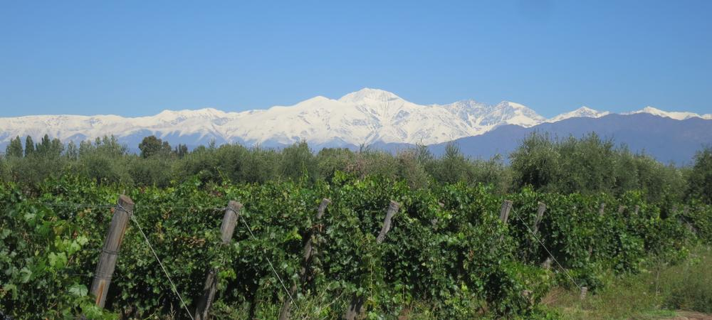 Mendoza: Wine And Mountains